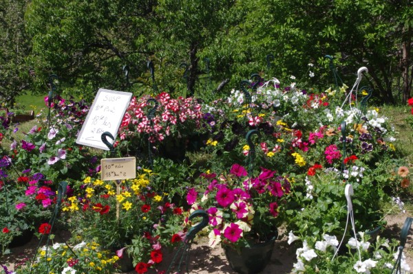 La Jardinerie des Grands Bois